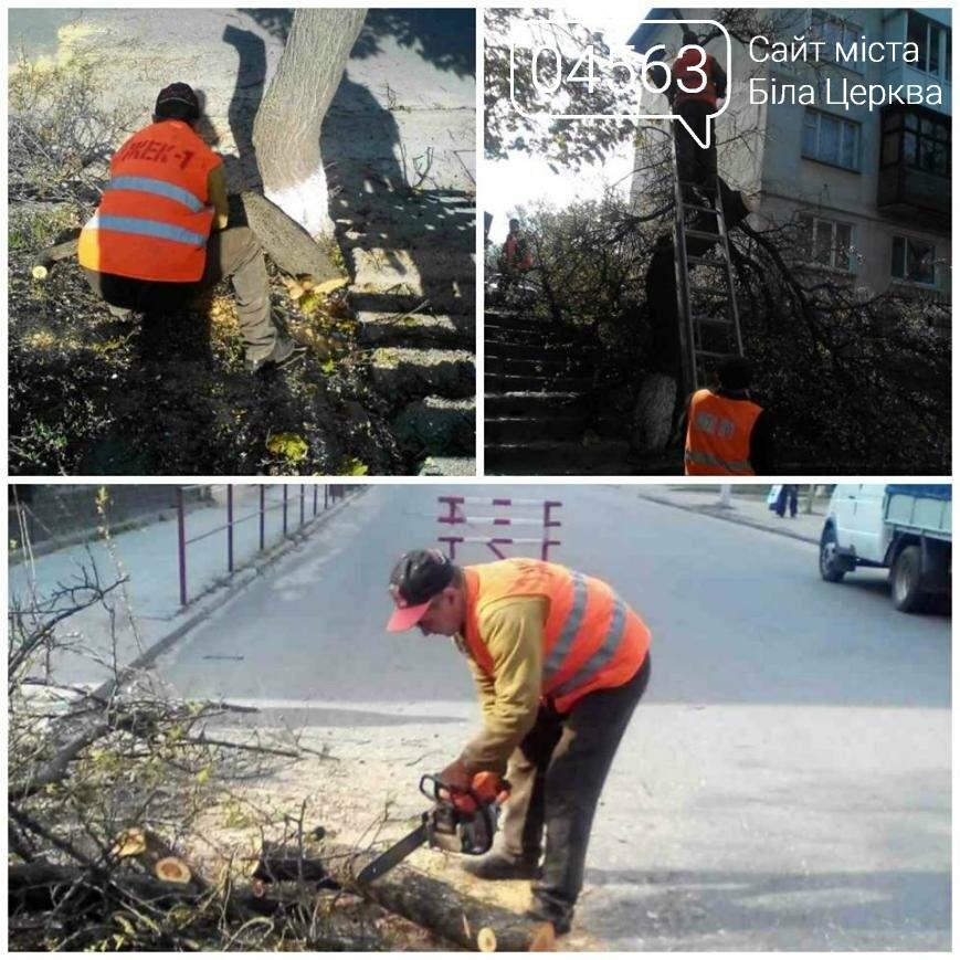 """Аварійні дерева: Як боротися з """"небезпечними сусідами"""", фото-2"""