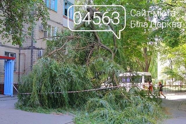 """Аварійні дерева: Як боротися з """"небезпечними сусідами"""", фото-1"""