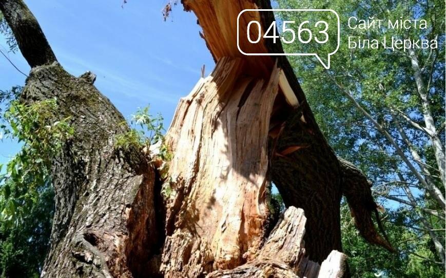 """Аварійні дерева: Як боротися з """"небезпечними сусідами"""", фото-3"""