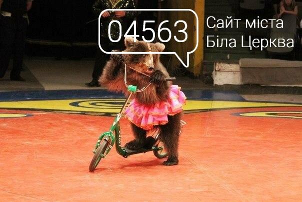 Мешканці Білої Церкви подали петицію щодо заборони пересувних цирків з тваринами