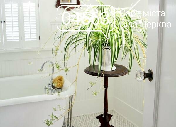 Зелені екстремали: 10 не вимогливих рослин для вашого будинку