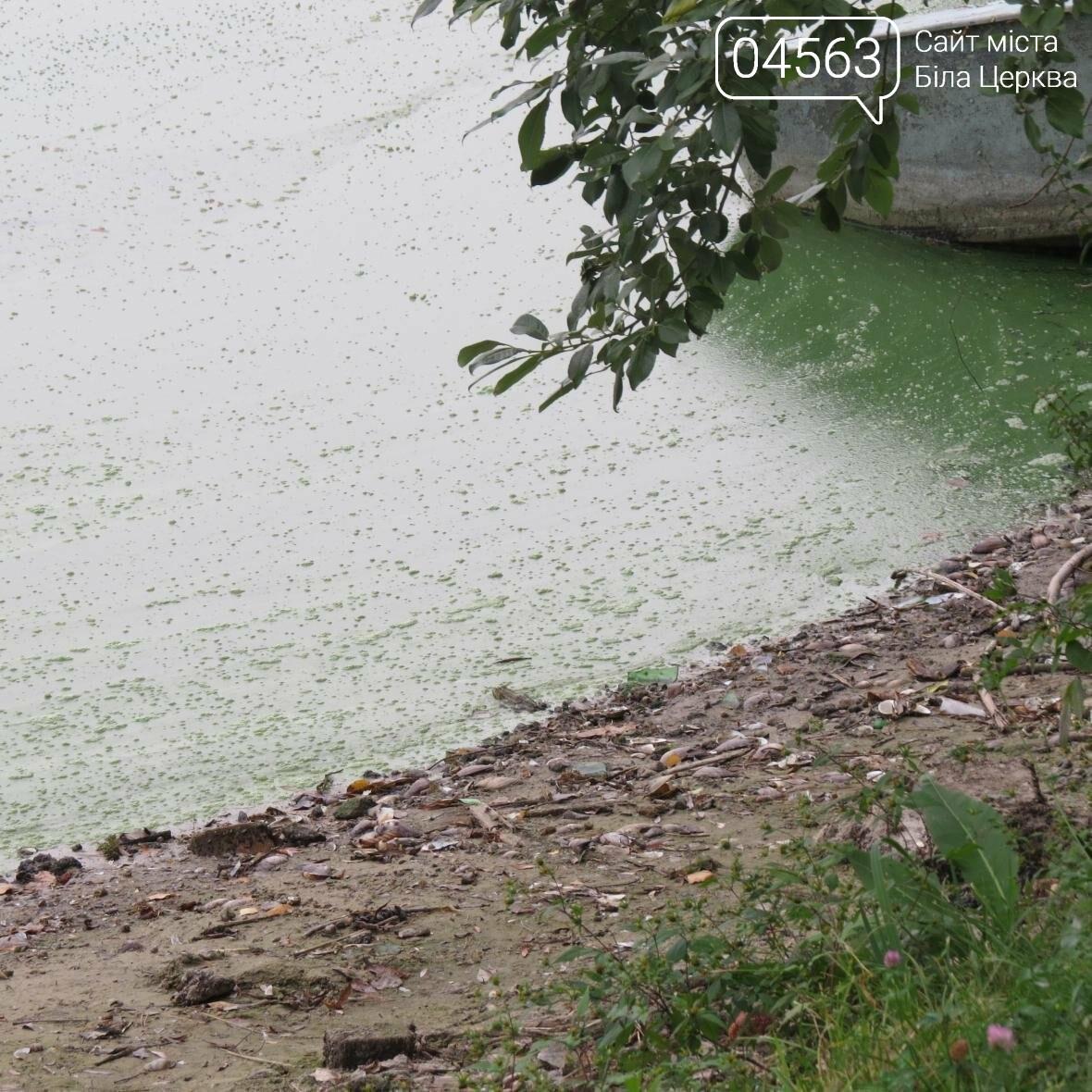 Чому вода з під крану у Білій Церкві має «річковий» запах