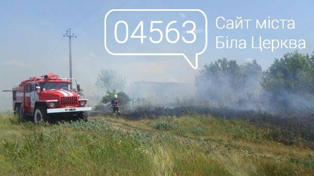 Поле Білоцерківськікого аграрного універсітету вже четвертий раз поспіль підпалюють невідомі