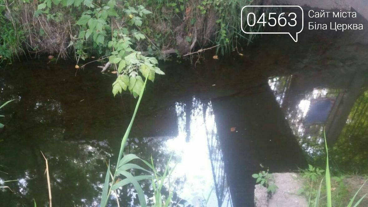 У Білій Церкві заборонили купатися в річці Рось