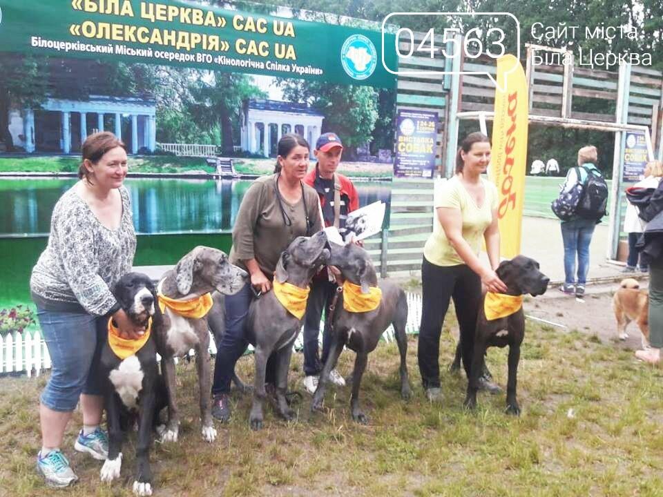 У Білій Церкві відбулася дводенна виставка породистих собак, фото-10