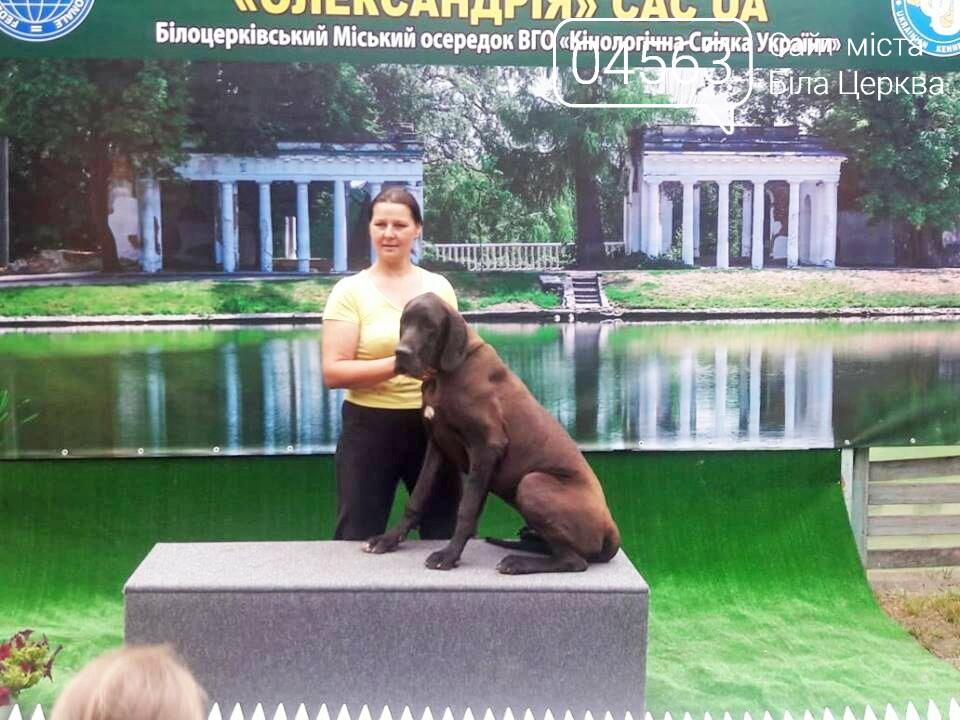 У Білій Церкві відбулася дводенна виставка породистих собак, фото-1