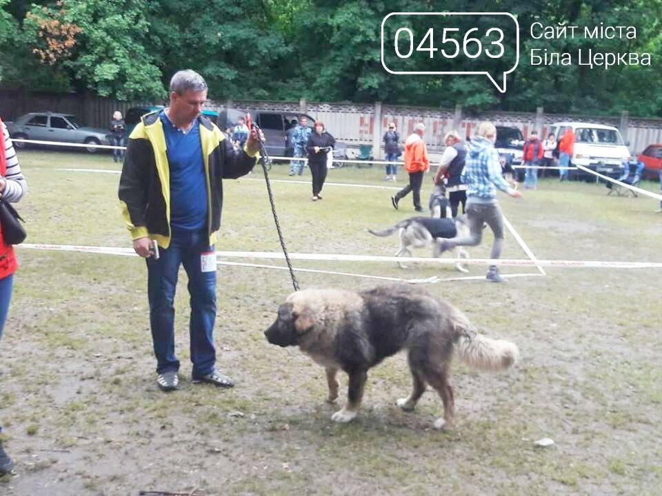У Білій Церкві відбулася дводенна виставка породистих собак, фото-2
