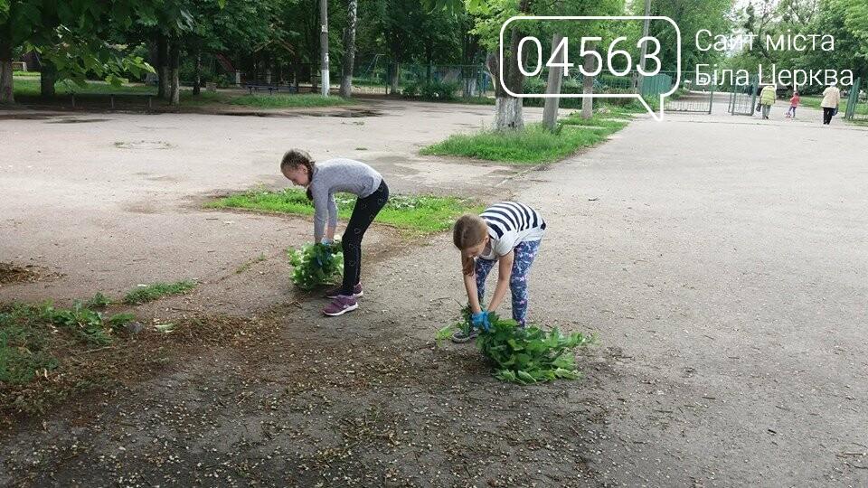 Білоцерківські активісти прикрасять дерева в'язаними візерунками, фото-2