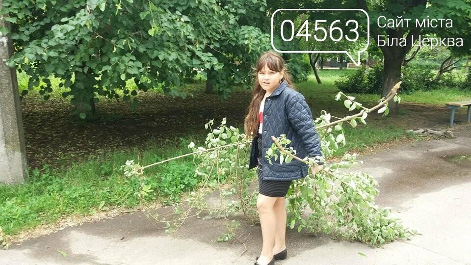 Білоцерківські активісти прикрасять дерева в'язаними візерунками, фото-4