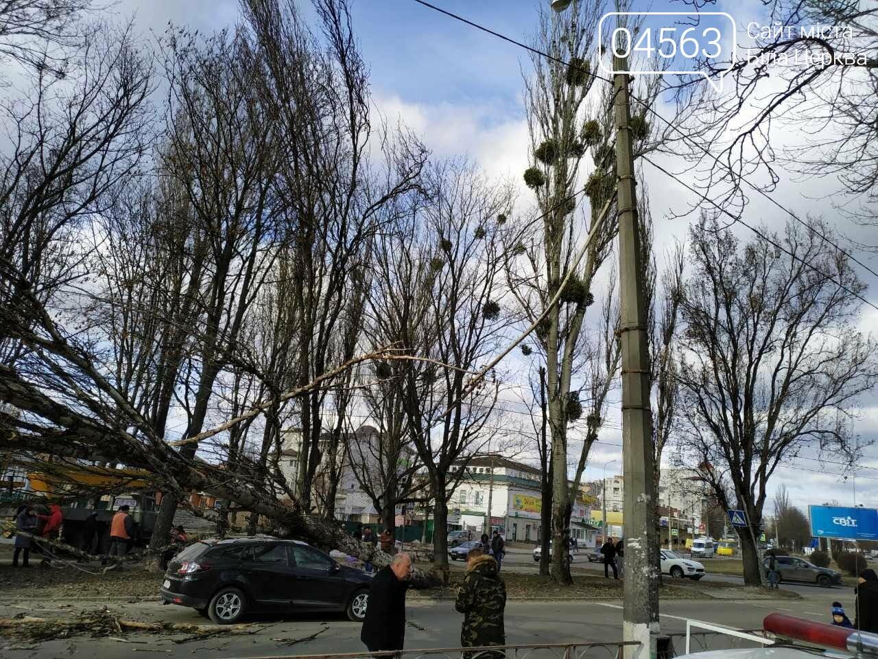У Білій Церкві дерево впало на автомобіль (ФОТО), фото-2