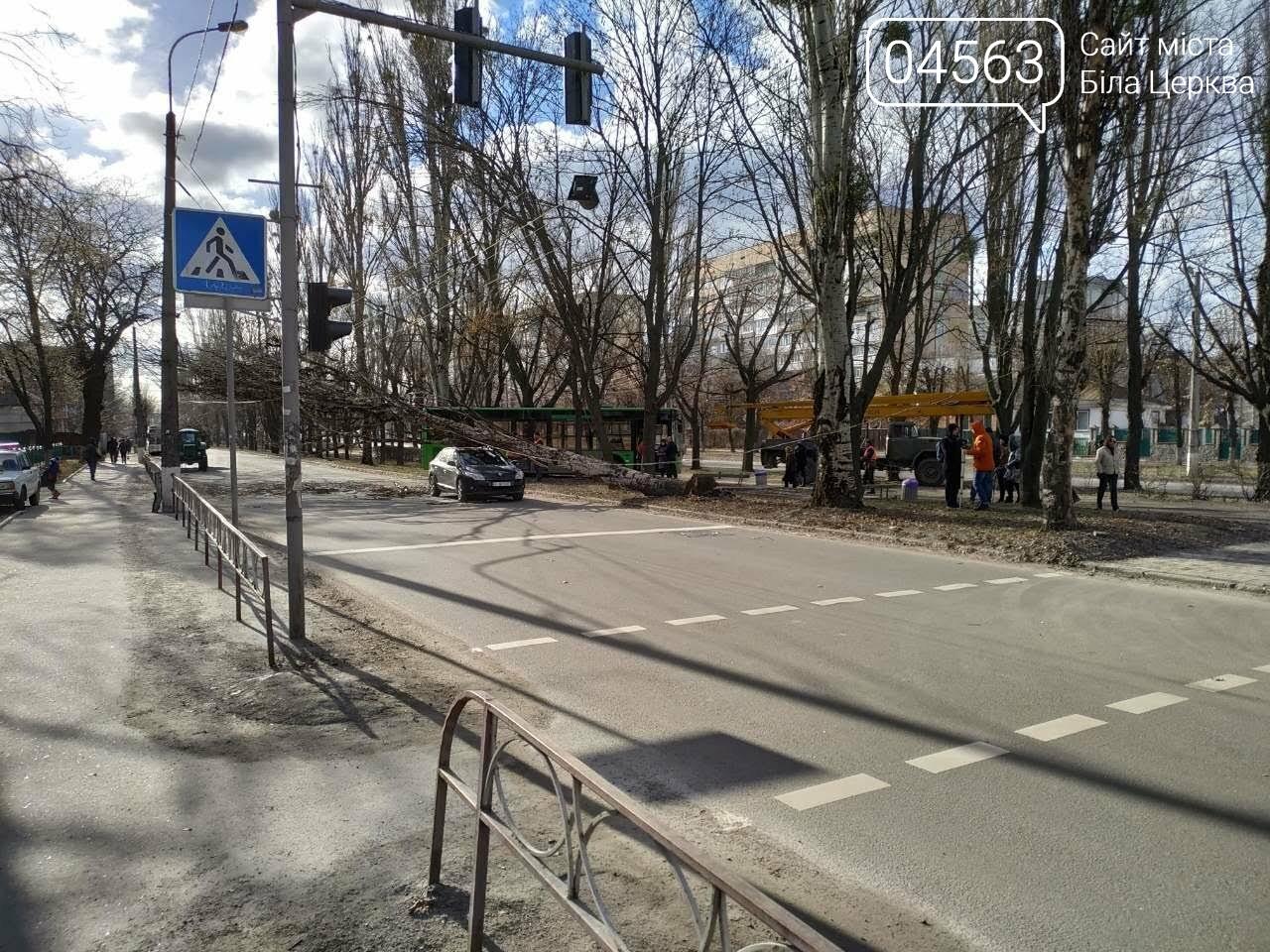 У Білій Церкві дерево впало на автомобіль (ФОТО), фото-8