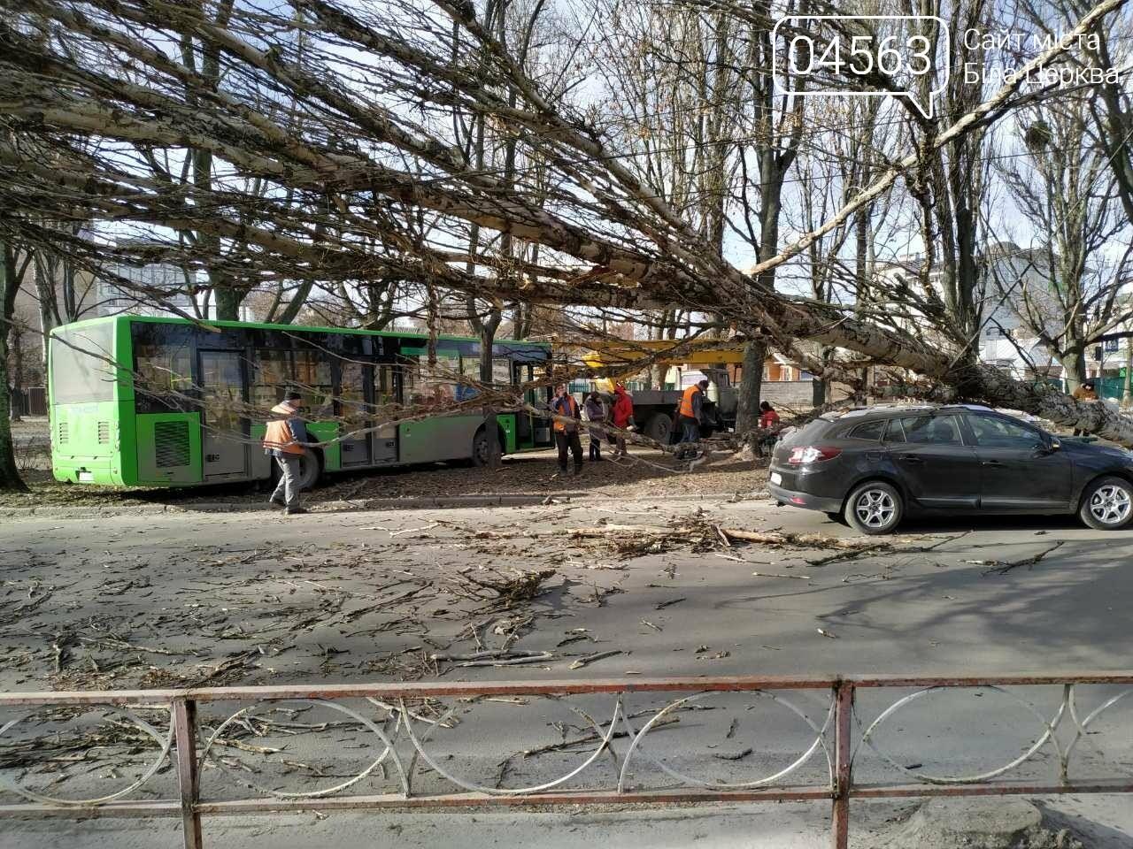 У Білій Церкві дерево впало на автомобіль (ФОТО), фото-1