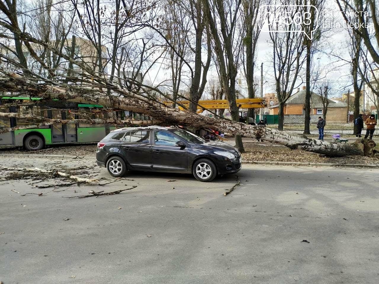 У Білій Церкві дерево впало на автомобіль (ФОТО), фото-3
