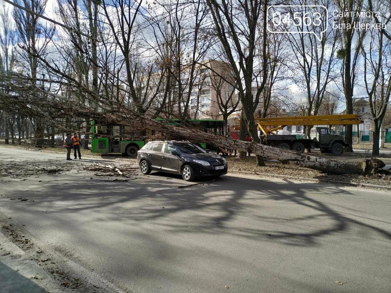 У Білій Церкві дерево впало на автомобіль (ФОТО), фото-5