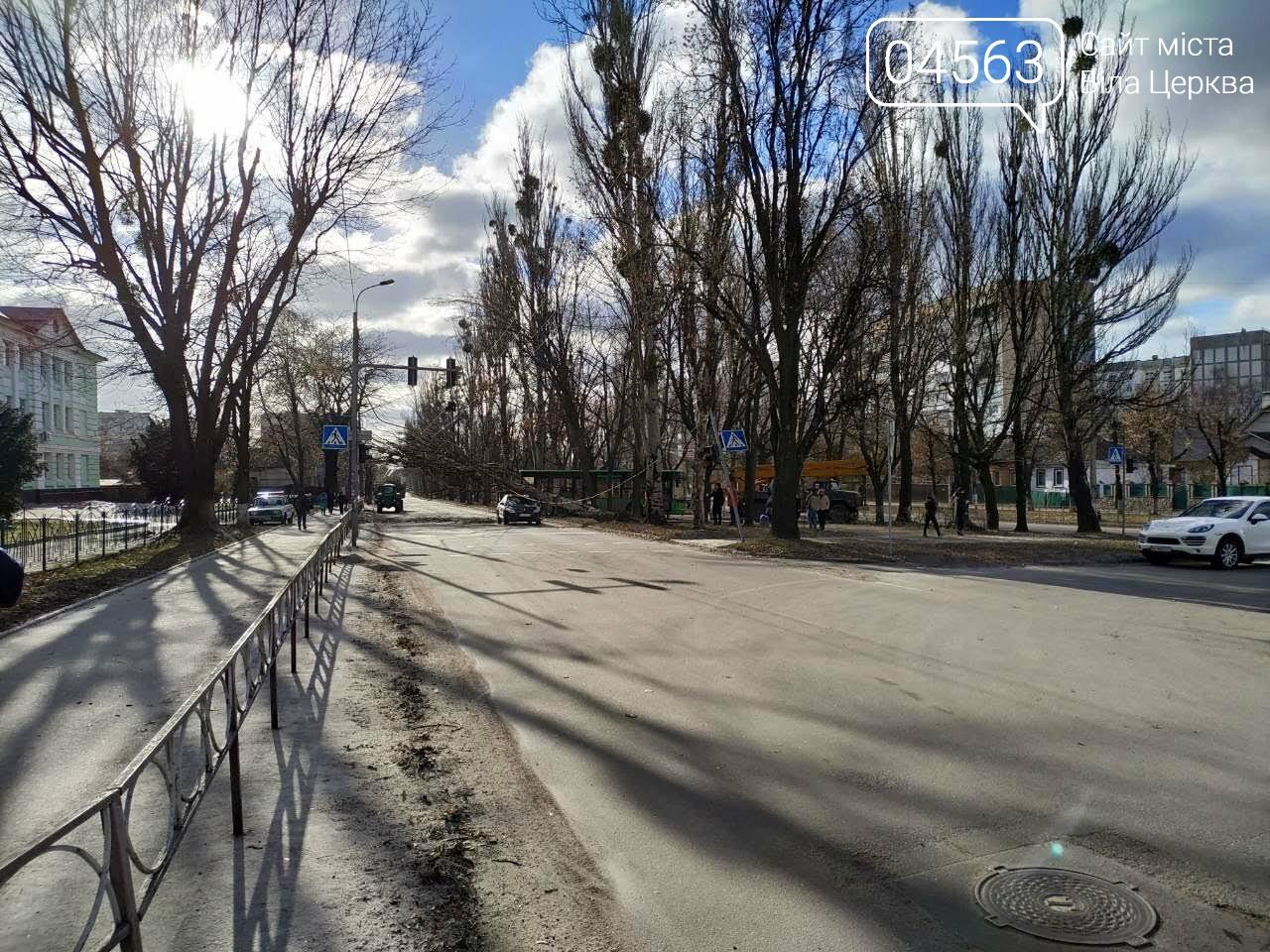 У Білій Церкві дерево впало на автомобіль (ФОТО), фото-6
