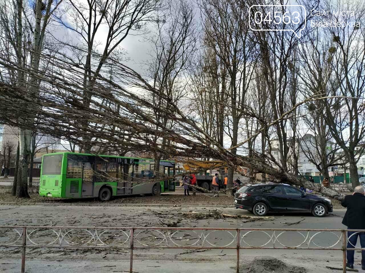 У Білій Церкві дерево впало на автомобіль (ФОТО), фото-7