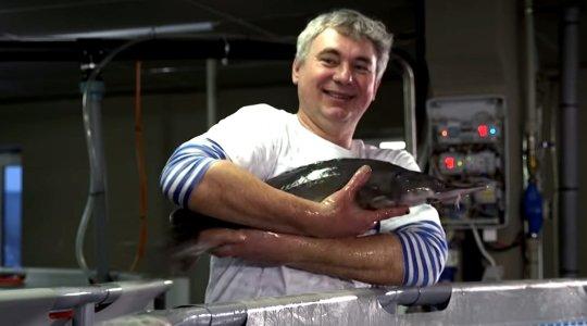 Риба мрії: білоцерківський радіофізик вирощує осетрів на молочній фермі, фото-1