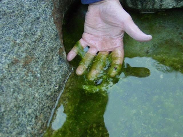 У річці Рось може розпочатися масова загибель риби