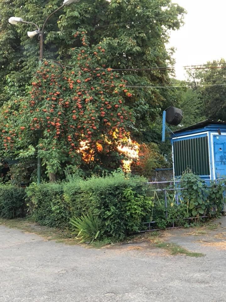 У парку Шевченка в Білій Церкві сталася пожежа, фото-3