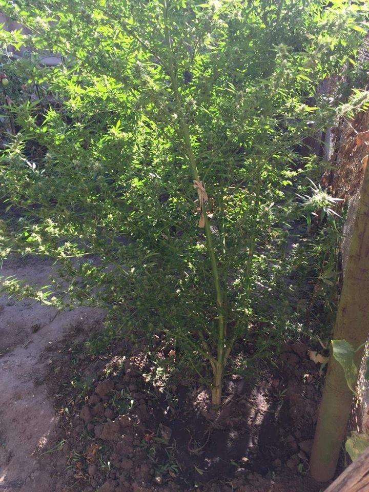 У Білій Церкві по бульвару Олександрійському збили 62-річну жінку , фото-6
