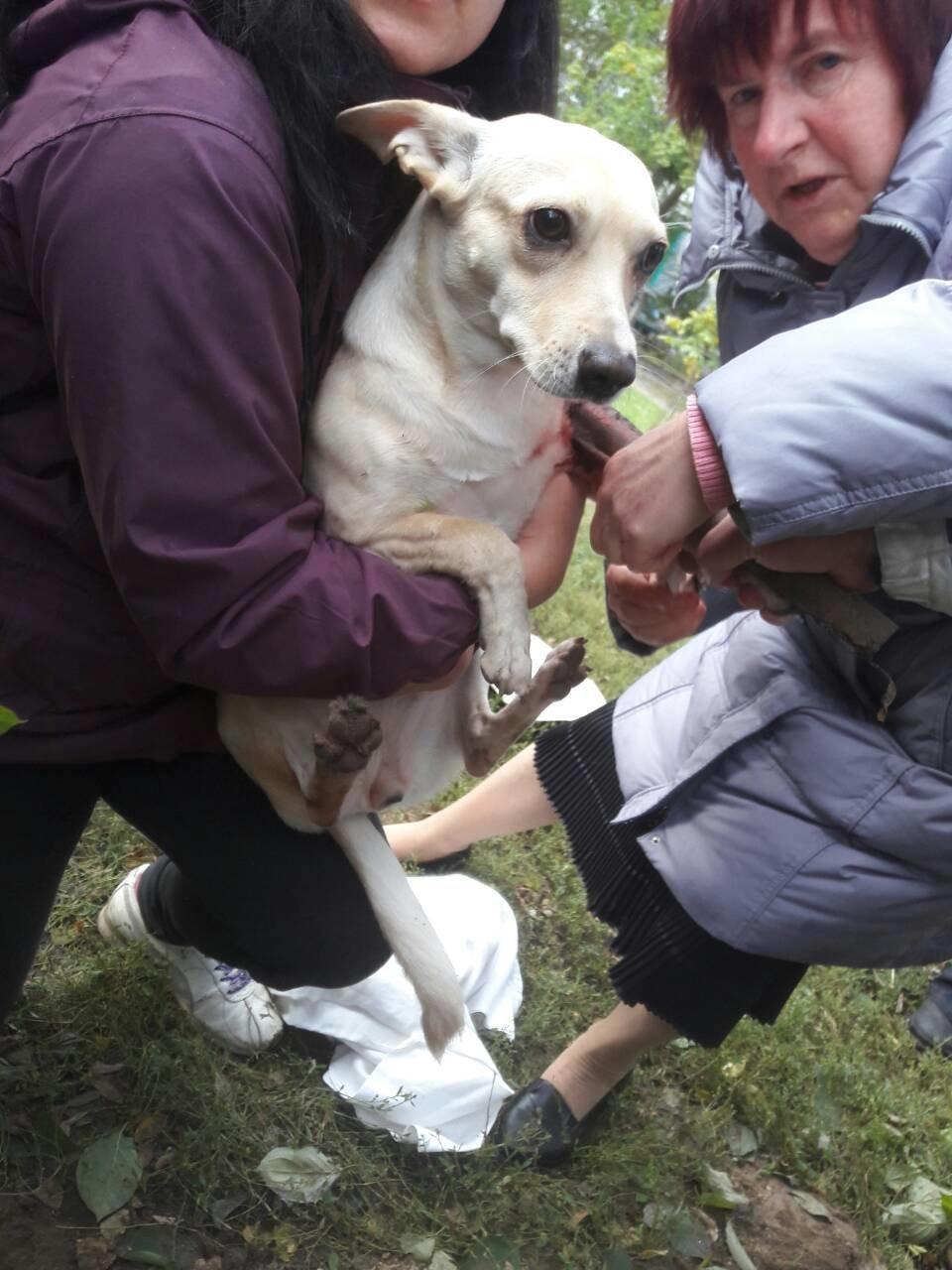У Білій Церкві рятувальники надали допомогу собаці, фото-2