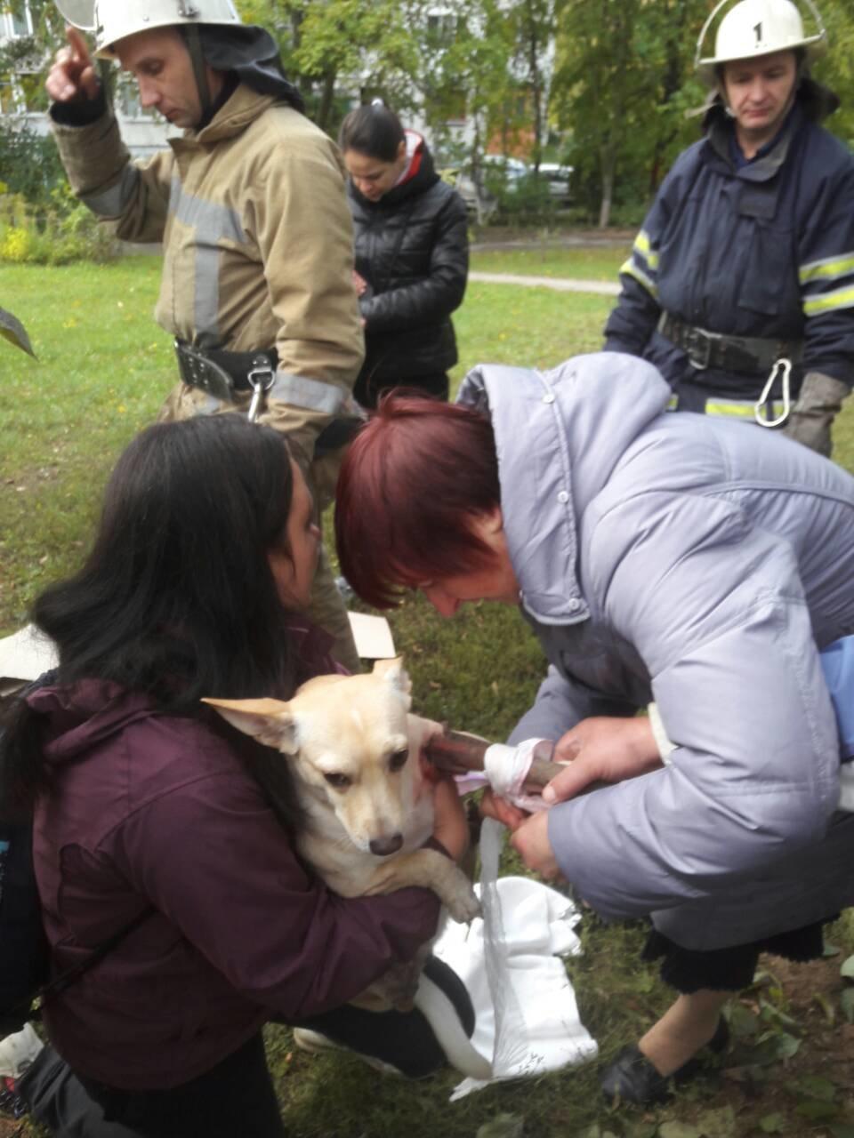 У Білій Церкві рятувальники надали допомогу собаці, фото-1