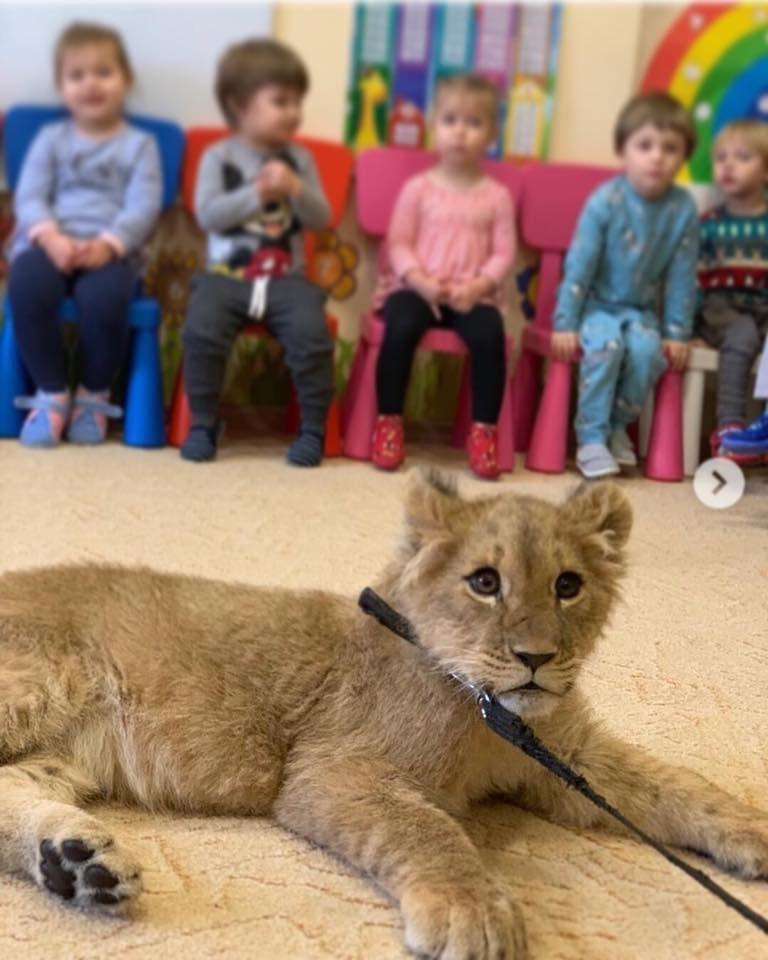 У приватний дитячий садок в Білій Церкві привели замученого левеня, фото-1
