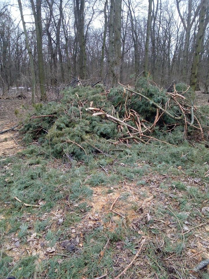 У мікрорайоні Гайок незаконно вирубують дерева – жителі готові протестувати , фото-3