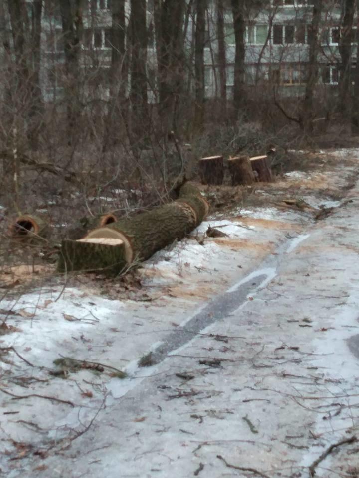 У мікрорайоні Гайок незаконно вирубують дерева – жителі готові протестувати , фото-7