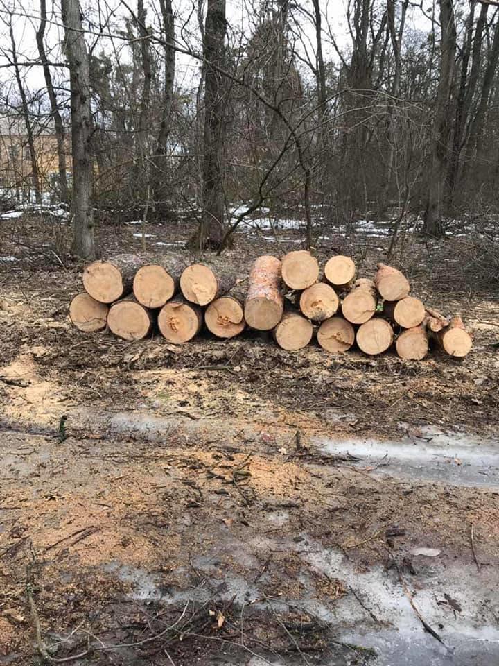У мікрорайоні Гайок незаконно вирубують дерева – жителі готові протестувати , фото-1