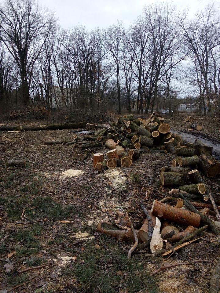 У мікрорайоні Гайок незаконно вирубують дерева – жителі готові протестувати , фото-5