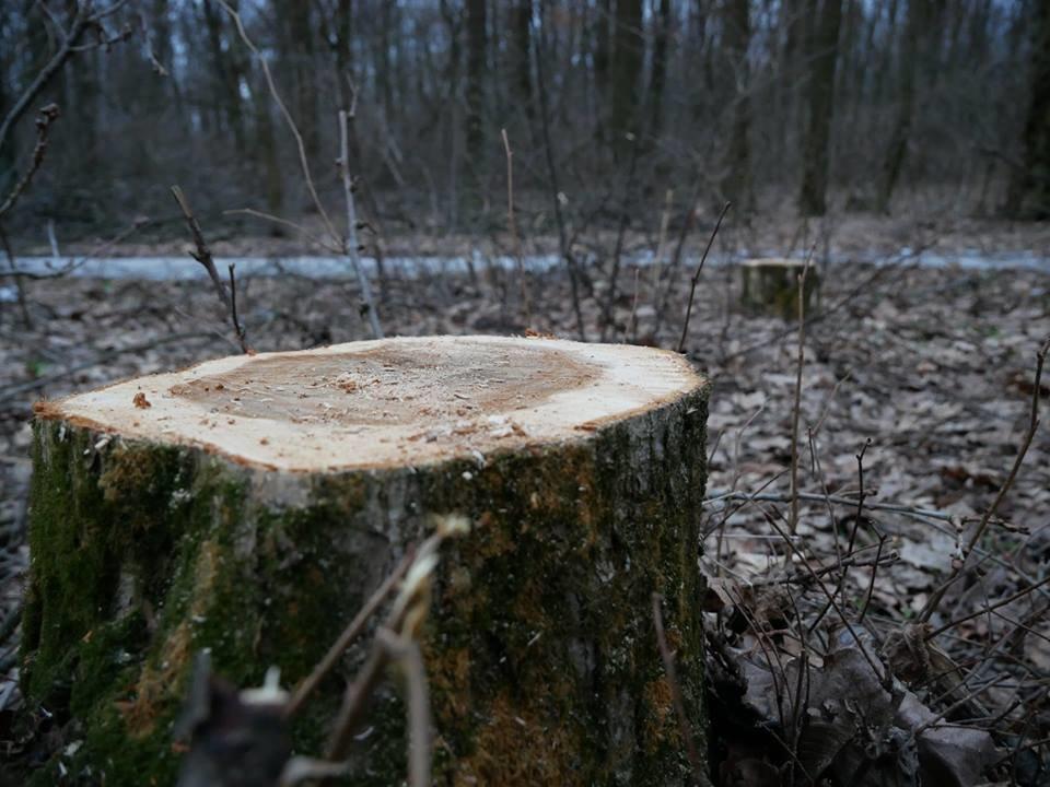 Фурсівська сільська рада надала ордер на вирубку 830 дерев у мікрорайоні Гайок , фото-7