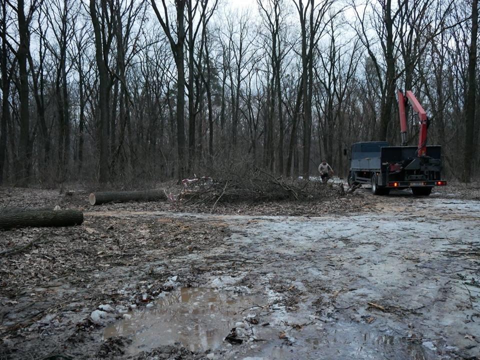 Фурсівська сільська рада надала ордер на вирубку 830 дерев у мікрорайоні Гайок , фото-10
