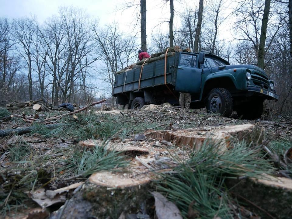Фурсівська сільська рада надала ордер на вирубку 830 дерев у мікрорайоні Гайок , фото-6