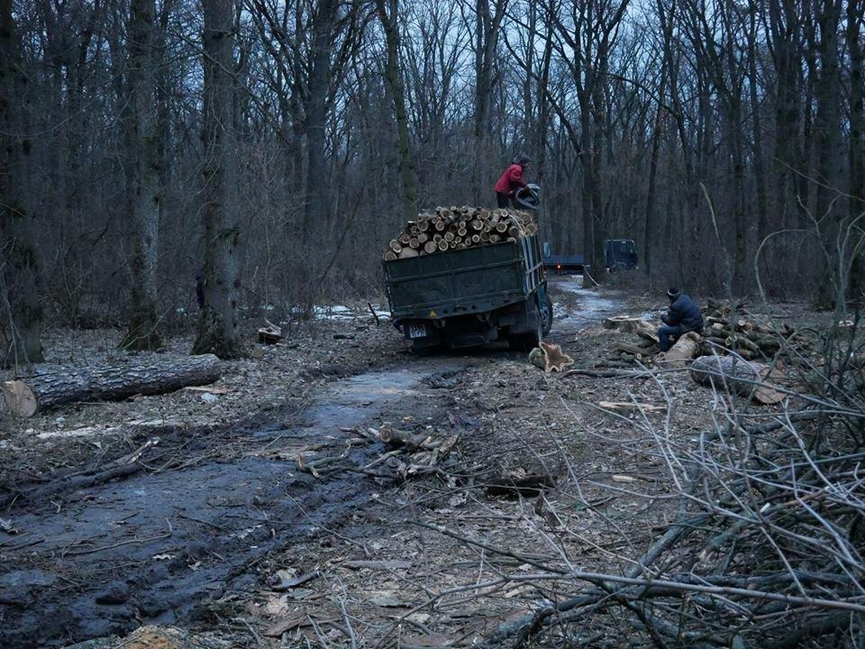 Фурсівська сільська рада надала ордер на вирубку 830 дерев у мікрорайоні Гайок , фото-4