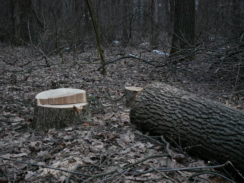 Фурсівська сільська рада надала ордер на вирубку 830 дерев у мікрорайоні Гайок , фото-8