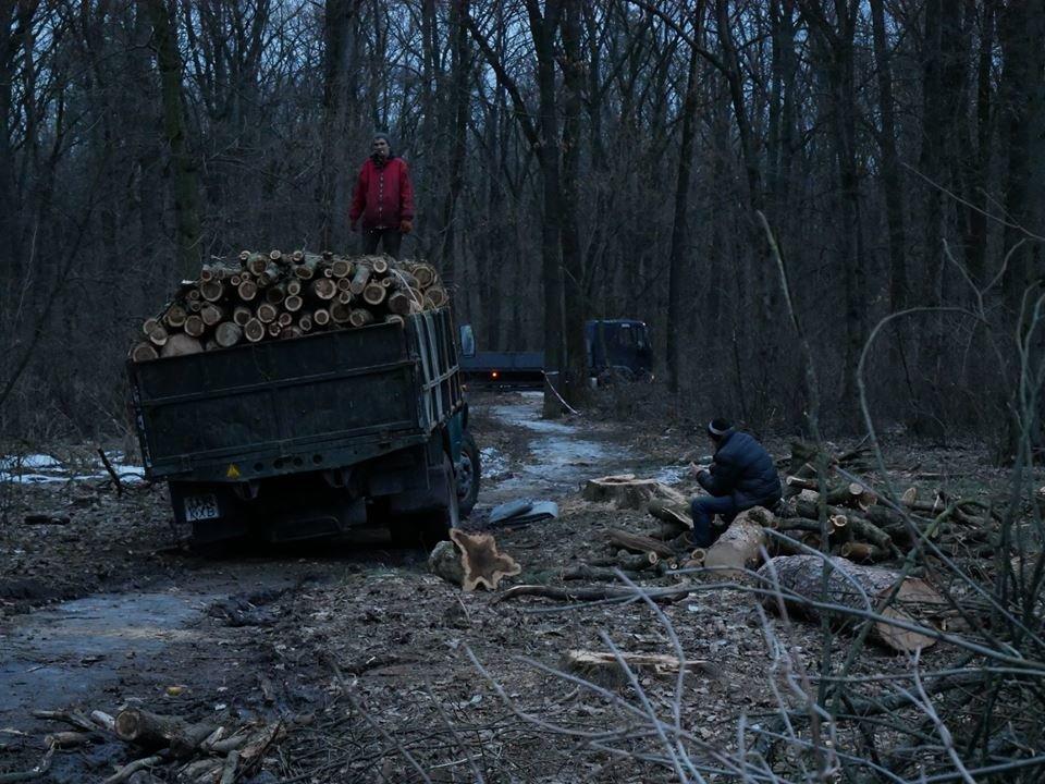 Фурсівська сільська рада надала ордер на вирубку 830 дерев у мікрорайоні Гайок , фото-3