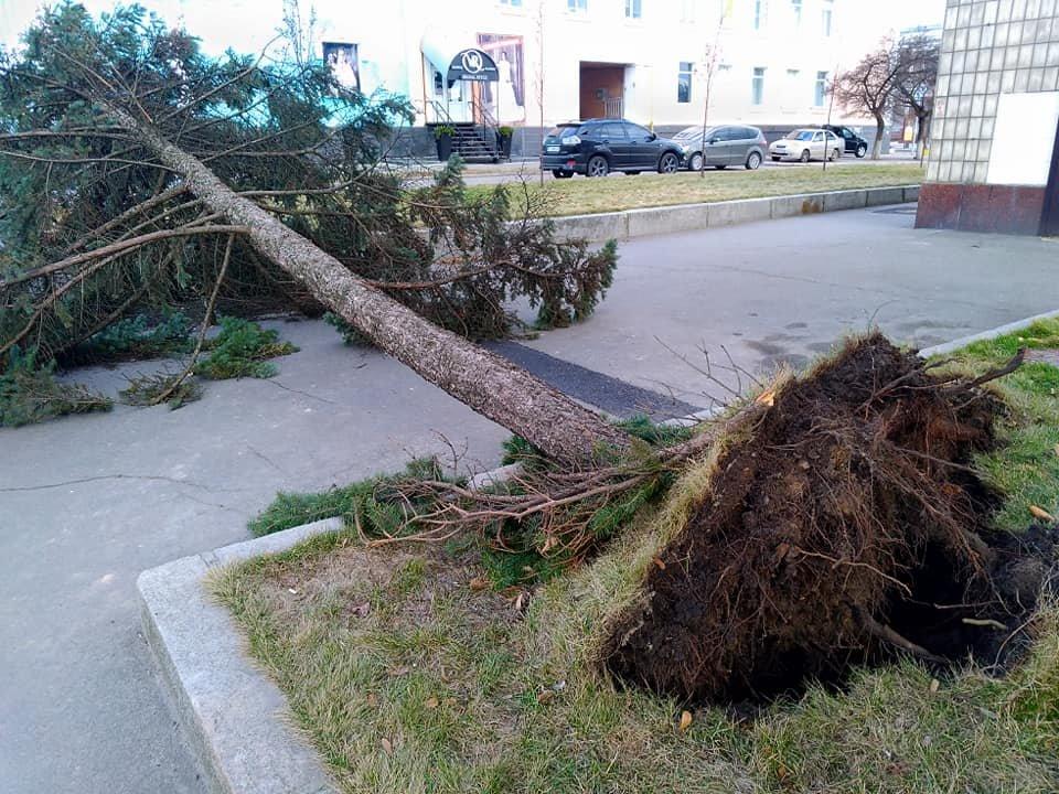 Повалені дерева і зірвані дахи: що наробила негода в Білій Церкві, фото-10