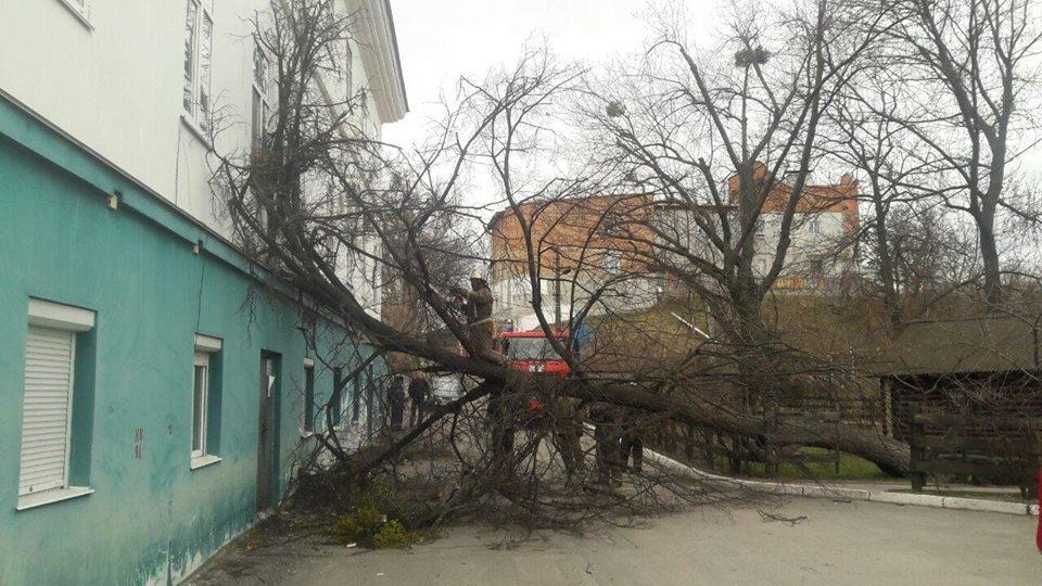Повалені дерева і зірвані дахи: що наробила негода в Білій Церкві, фото-3