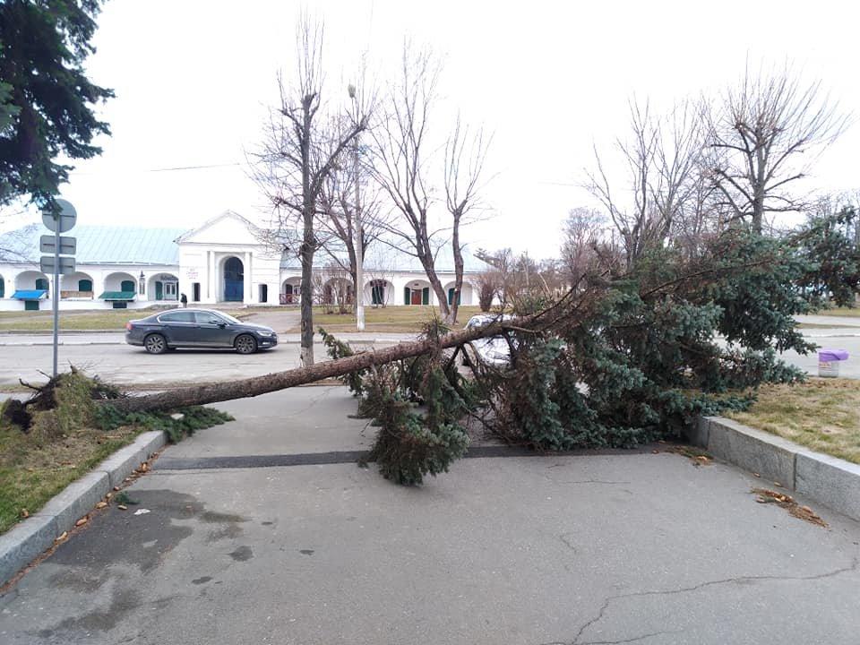 Повалені дерева і зірвані дахи: що наробила негода в Білій Церкві, фото-11