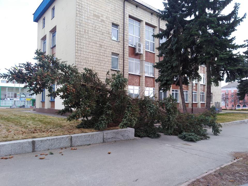 Повалені дерева і зірвані дахи: що наробила негода в Білій Церкві, фото-9