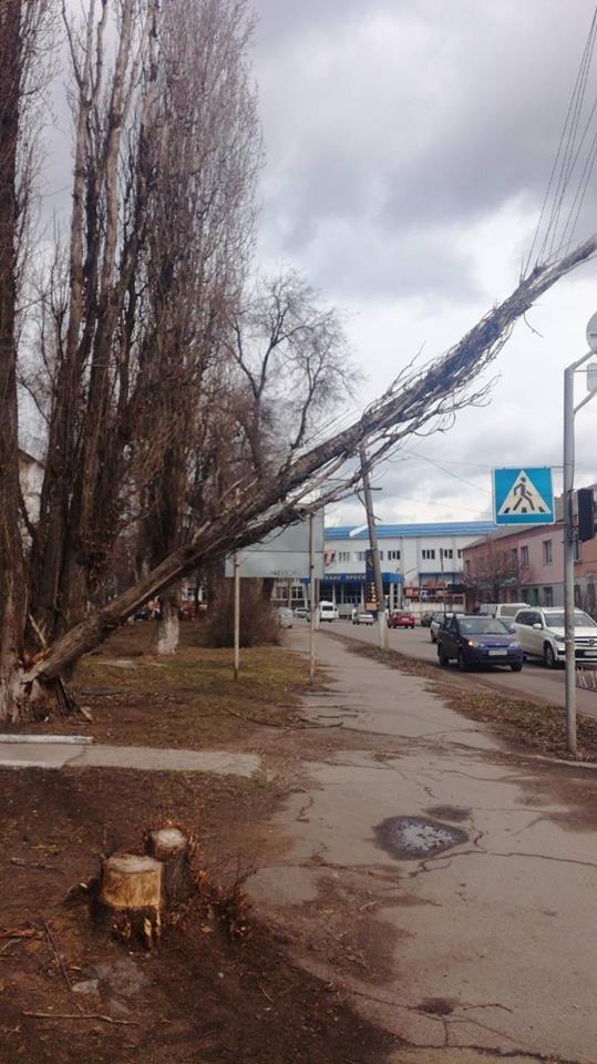 Повалені дерева і зірвані дахи: що наробила негода в Білій Церкві, фото-8