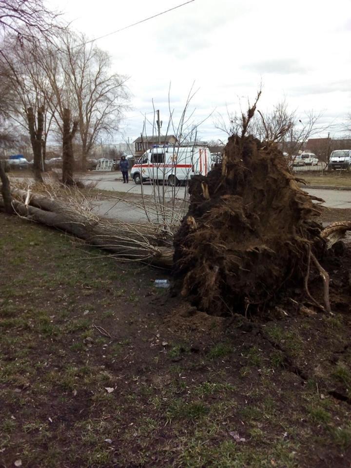Повалені дерева і зірвані дахи: що наробила негода в Білій Церкві, фото-4