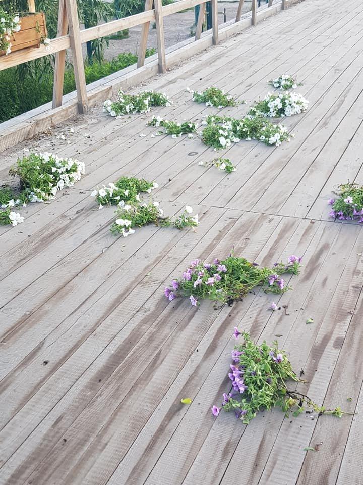 У Білій Церкві вандали знову понівечили квіткові кашпо на Дерев'яному мосту , фото-3
