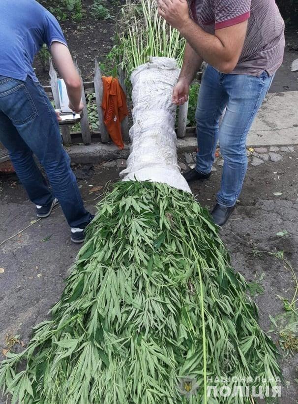 Житель Білоцерківщини влаштував на своєму подвір'ї плантацію конопель , фото-2