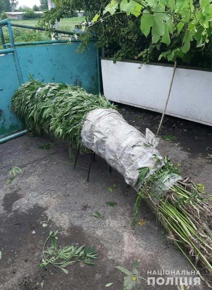 Житель Білоцерківщини влаштував на своєму подвір'ї плантацію конопель , фото-1