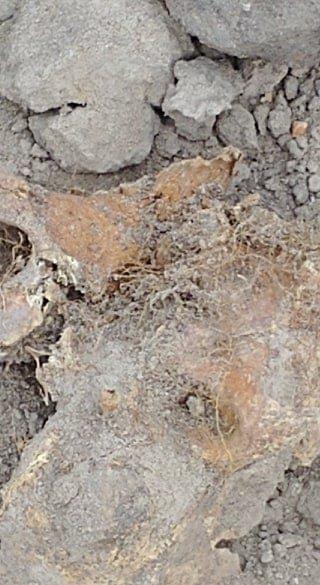 У Білій Церкві під час будівництва гуртожитку на території колишнього єврейського кладовища знайшли останки людей, фото-3