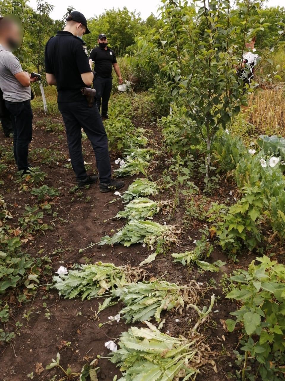 На Київщини поліціянти виявили понад 400 рослин снодійного маку, фото-1