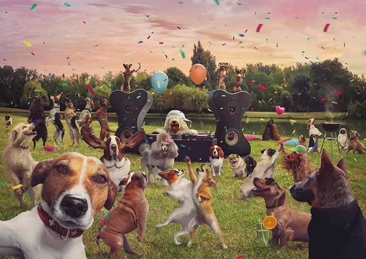 """Свято для власників собак """"Паті Пес"""" відбудеться у Білій Церкві, фото-1"""